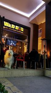 wild-dog-mascota-puebla